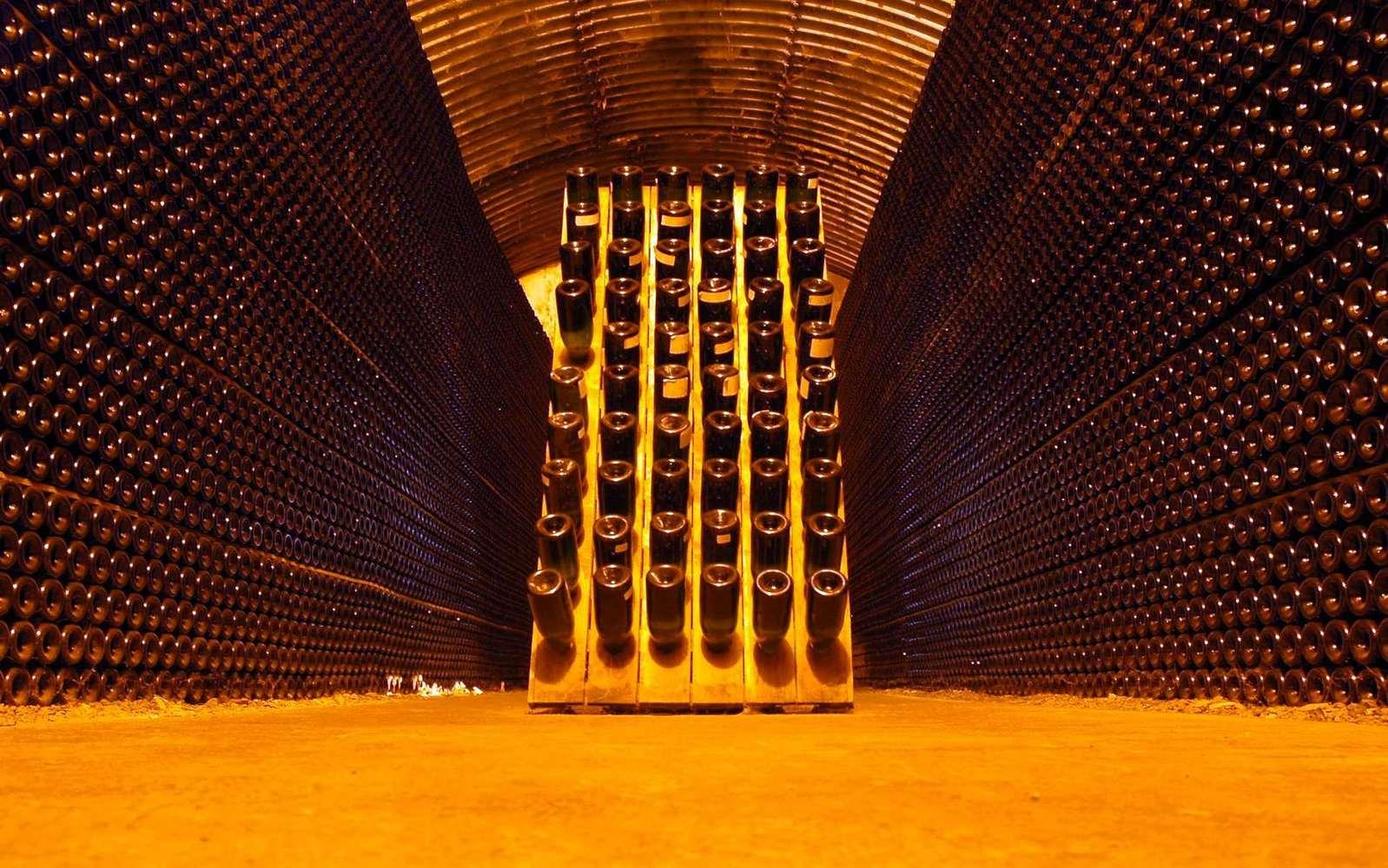 trappe cave a vin enterree