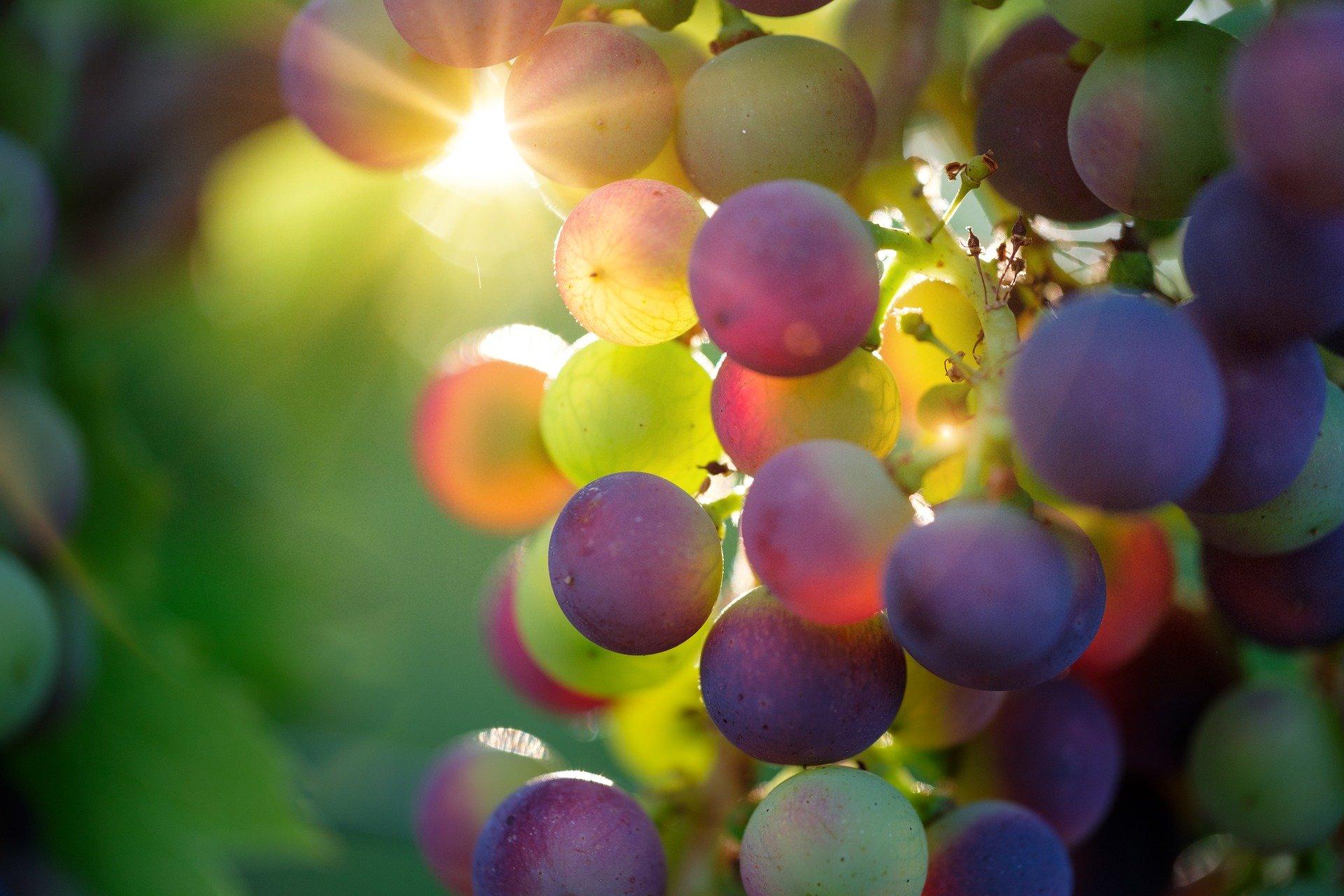 Quelle est l'importance du millésime dans les vins à conserver ?