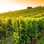 régions viticoles